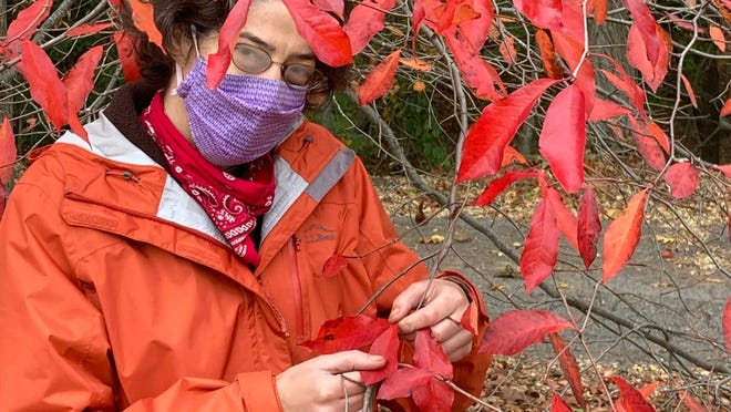 Nyssa Patten examines black gum leaves at the Newton Centre playground.