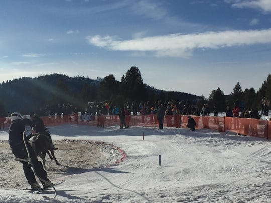 More than 300 people attended the first-annual skijoring
