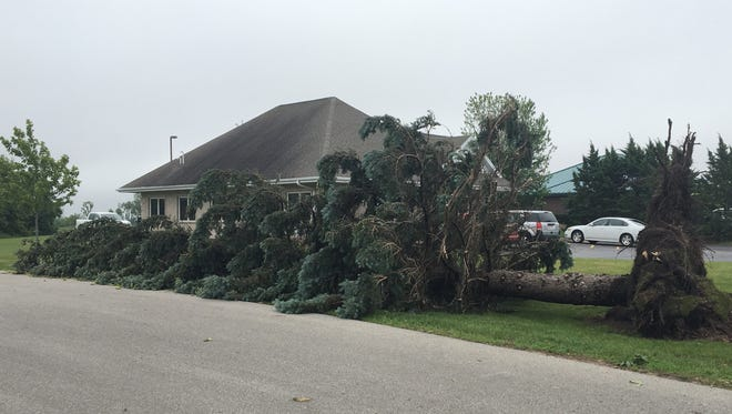 An uprooted tree on the grounds of the Prevea clinic on South St. Augustine Street in Pulaski. The National Weather Service confirmed at least six tornados touched down in northeastern Wisconsin Wednesday afternoon.