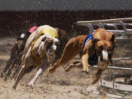 Greyhounds  FILE 01.jpg