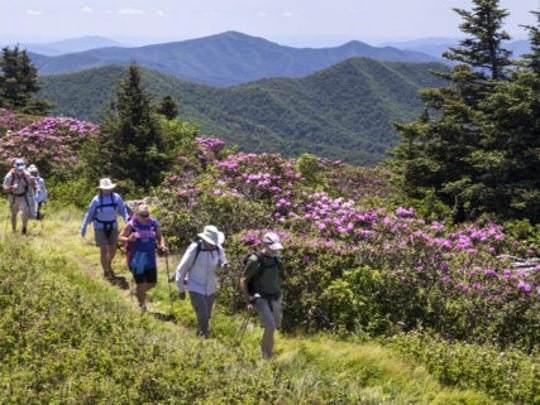 The Southern Appalachian Highlands Conservancy will lead hikes on Roan Mountain June 17 for its June Jamboree.