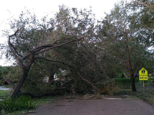 Trees are down at the entrance to Three Oaks Elementary
