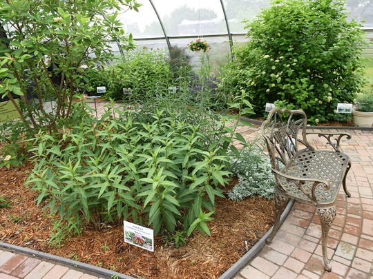 """Brenda's Butterfly Habitat at Barson's Greenhouse in Westland will be the site of this weekend's 3rd annual """"An Evening with The Butterflies"""" Charity Event."""