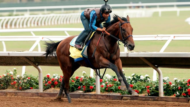 Triple Crown winner American Pharoah put in a serious work Saturday morning, July 18, 2015 at Del Mar Race Track in Del Mar, CA.  Trainer Bob Baffert oversaw the champ and jockey Martin Garcia cover the six furlongs in a crisp 1:11.40 in preparatiion for a planned start in the $1,000,000 Haskell Invitational to be contested on August 2 at Monmouth Park in Oceanport NY.©Benoit Photo