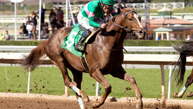 Ziconic, the second foal out of 2010 Horse of the Year Zenyatta, made his debut in Saturday's (Feb. 20, 2016) third race under Gary Stevens in a seven furlong maiden allowance race at Santa Anita Park, Arcadia CA.  The 3-year-old son of Tapit broke slowly from the gate and trailed  by a bunch, but turned it on toward home was a fast closing third to Fast Munny, first, and Dalmore, second.