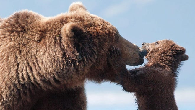 The Michigan Department of Natural Resources is offering a warning about bears in the state.