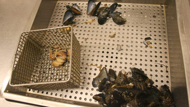 Shucked mussels await testing Friday at a state lab in Shoreline.
