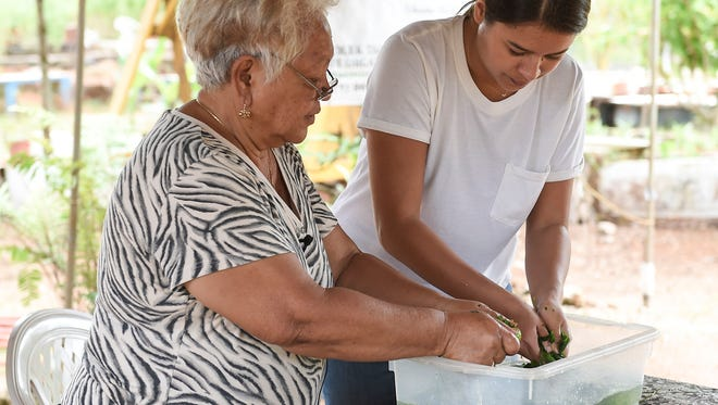 Åmot Tao Tao Tano Farm owner and suruhana, Bernice Nelson, shows Pacific Daily News reporter Chloe Babauta how to make åmot, an herbal medicine used for skin, infants, and in shampoo, at her farm in Dededo on March 14, 2018.