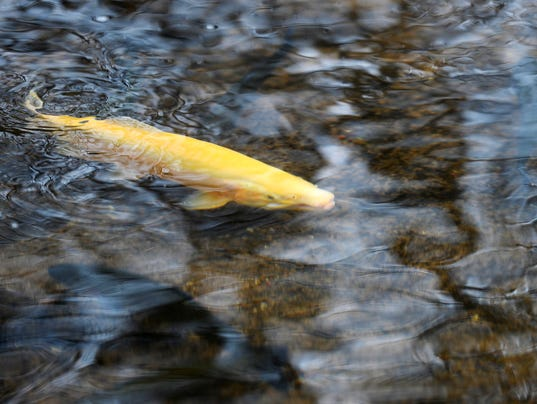 5-YDR-KP-032316-trout