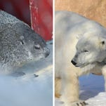 Stingl: On Groundhog Day we'll be looking for a polar bear shadow at the zoo. Weird, I know