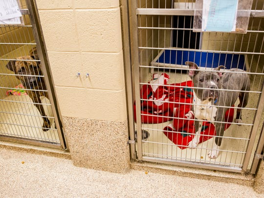 Wesley (right) stands in his pen at the Brandywine Valley SPCA in West Chester, Pa., on Thursday evening.