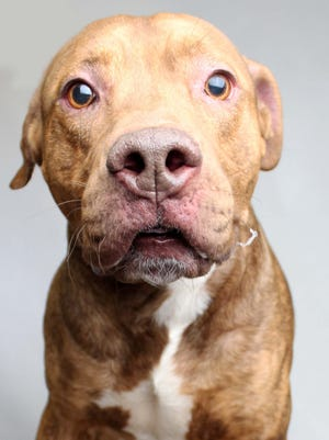 Dogs like 7-year-old Mason, seen here in a file photo when he lived at Young-Williams Animal Center, have had their adoption fees reduced by the shelter.