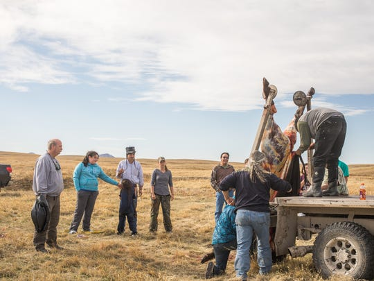 Roughly 10 students participated in a bison hunt a week ago on the Fort Belknap Reservation as part of the Immersion Program.