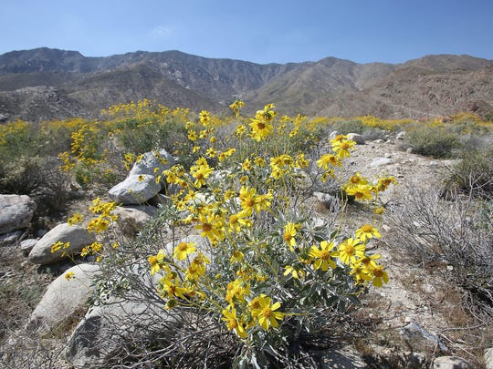 A large scenic area near the Lykken Trailhead in Palm Springs could become a 117-acre home development on South Palm Canyon Drive near the popular Lykken hiking trail.
