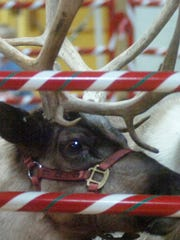 Santa's reindeer made a stop at Addams Elementary Early Childhood Center in this file photo. Animal-rights activists addressed Plymouth officials this week, asking them to ban the use of live animals for entertainment in the city.