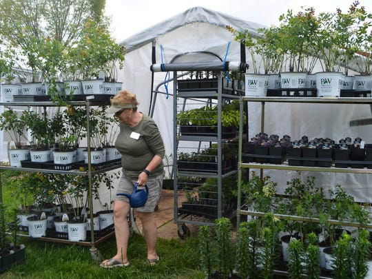 """Denise Lynch and her husband Roger Lynch are the caretakers at """"Jason's Greenhouse"""" as they refer to the greenhouse in Newburgh, one of the three larger greenhouses in the area manned by Master Gardners. Denise works to prepare a group of plants for the upcoming plant sale."""