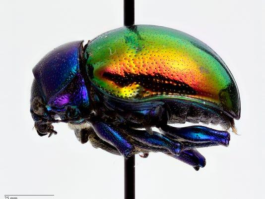 Bug closet specimen