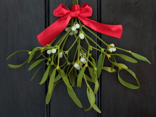 Mistletoe figures prominently in the beliefs of various