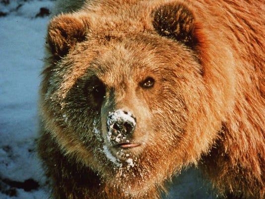 bear.bur-56spj5evp601h48ikqv_original