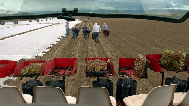 Planting crews at Grant Farms of Wellington work in this 2008 file photo.
