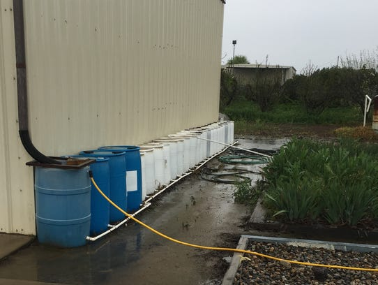 Containers Charles Spencer uses to collect rainfall