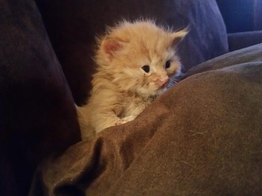Leo, a kitten who was found near Middletown, has tested positive for rabies.