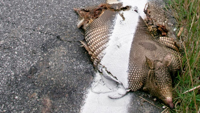 A dead armadillo is shown on the side of the road in Columbus, Ga.