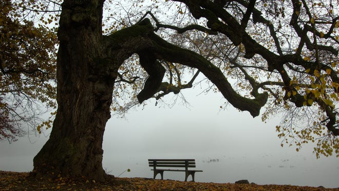 Park bench ona little lake under an old tree in the Nymphenburg Castle park in Munich, Germany on a foggy Autumn day.
