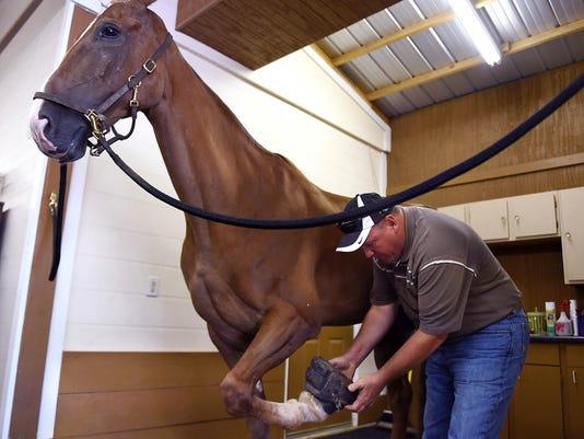 -NAS-WALKING HORSE RESCUE-01b.jpg_20150829.jpg