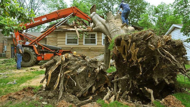 Depending on size and condition, having a tree cut down will average somewhere between $400 and $2,000.