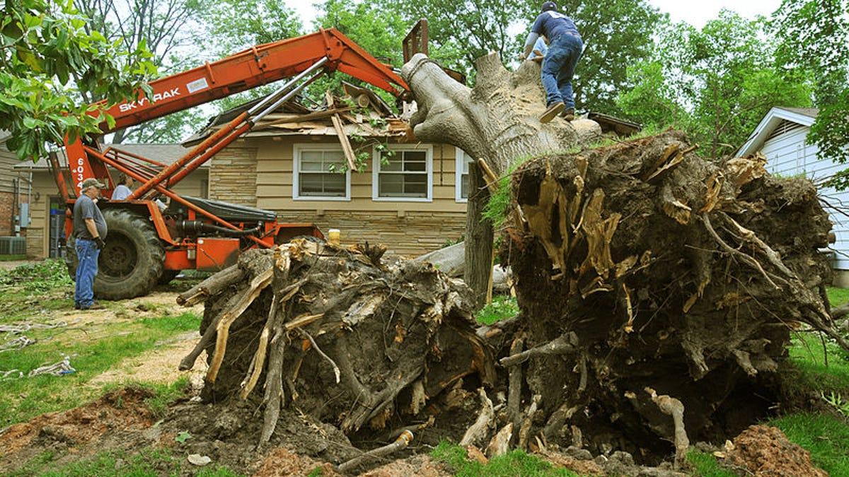 The Tree Fee Who Pays The Cost Of Tree Removal
