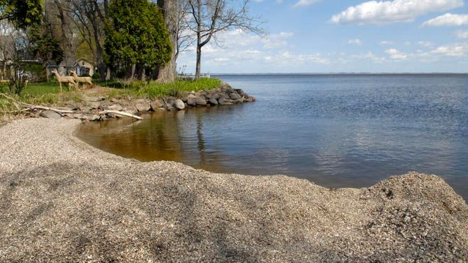 The value of lakefront properties in central and northern Wisconsin with  invasive zebra mussels actually increased, compared to properties where mussels are not found.