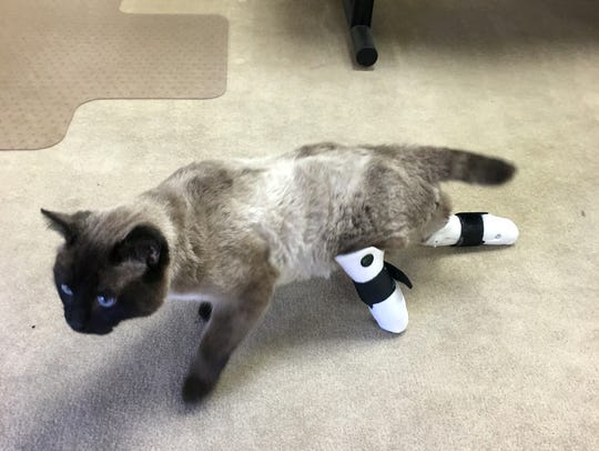 Prosthetic legs are still new to Aston, but he's learning