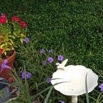 Create a backyard refuge for wildlife