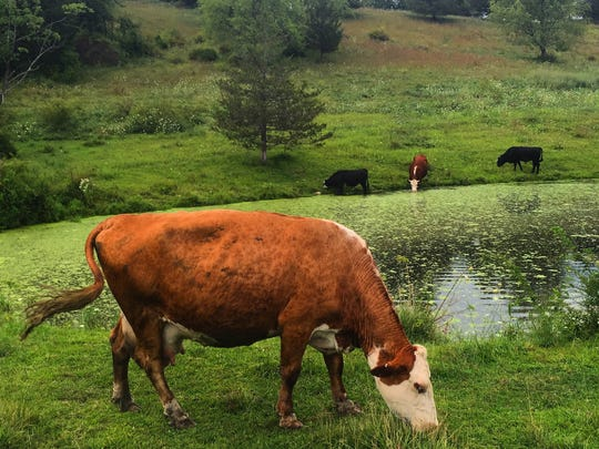 You never know what you might see on the Harlem Valley