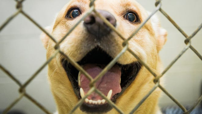 The Muncie Animal Care and Services facility is currently housing around 70 dogs with dozens of dogs available for adoption.