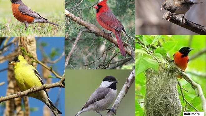 Help out with the Great Backyard Bird Count from Feb. 17-20.
