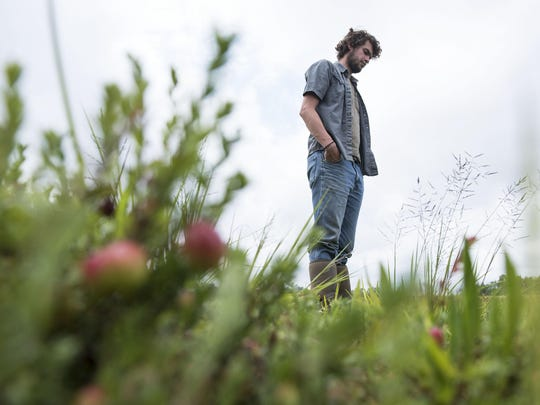 Michael Haines stands in a Pine Island Cranberry bog in Chatsworth.