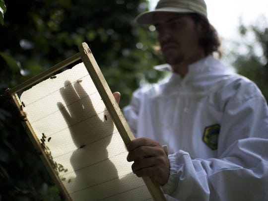 Urban farm educator Dean Buttacavoli investigates an unproductive beehive frame at the Ferry Avenue Orchard in Camden.