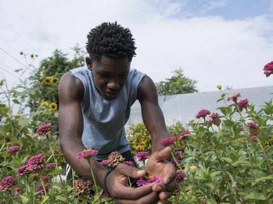 Assistant farmer Dimitrius Eliza, 17, pets a bumble bee at the Emerald Street garden in Camden.