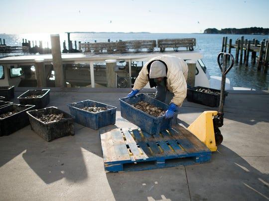 jl_edit_oyster_farmers_111914_4418.JPG