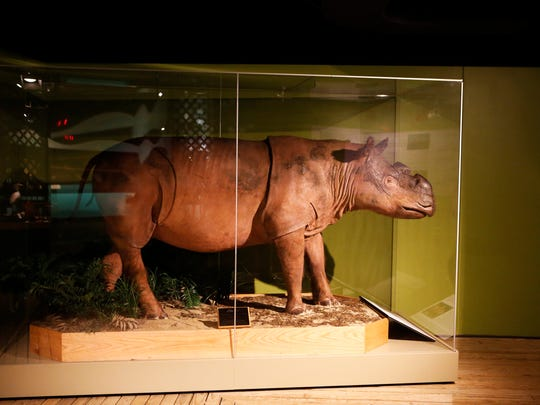 Dave Might and David Noem preserved Ipuh, the late Sumatran Rhinoceros from the Cincinnati Zoo and Botanical Garden. It was the largest animal Might had ever preserved. Ipuh is currently displayed in the Museum of Natural History & Science.