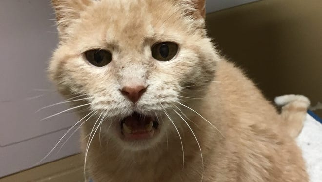 Charley wants to fill your home with cat chatter.