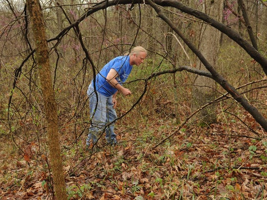 Jimmy Pendleton searches for morel mushrooms Thursday at Scioto Trail State Park.