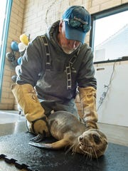 Kevin Robinson of SeaWorld's Rescue Team cares for an 8-month-old female sea lion pup at the animal theme park in San Diego.