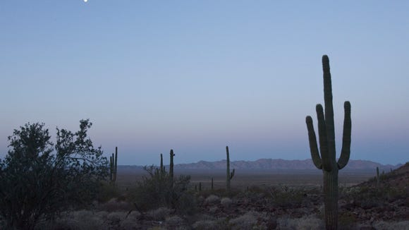 In the desert, autumn happens at dawn.