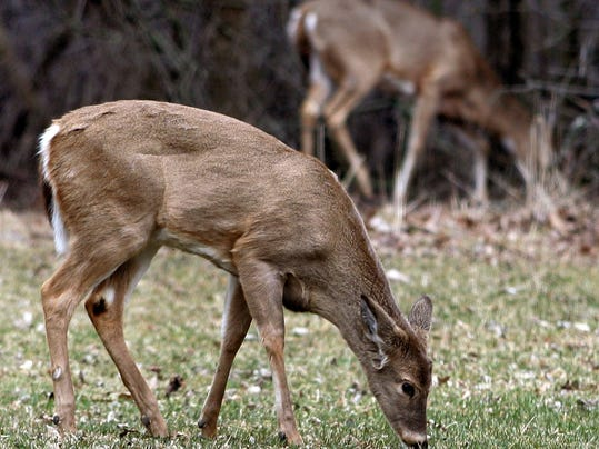 Spring Brings Fawns Out To Graze
