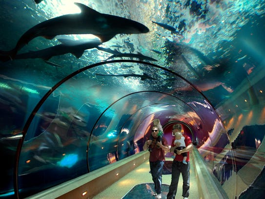 """""""The Passages of the Deep"""" exhibit allows you to walk"""