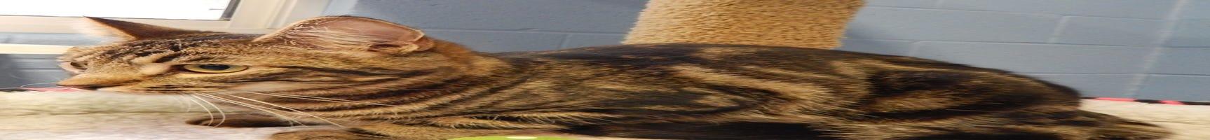 Mesquite Animal Shelter