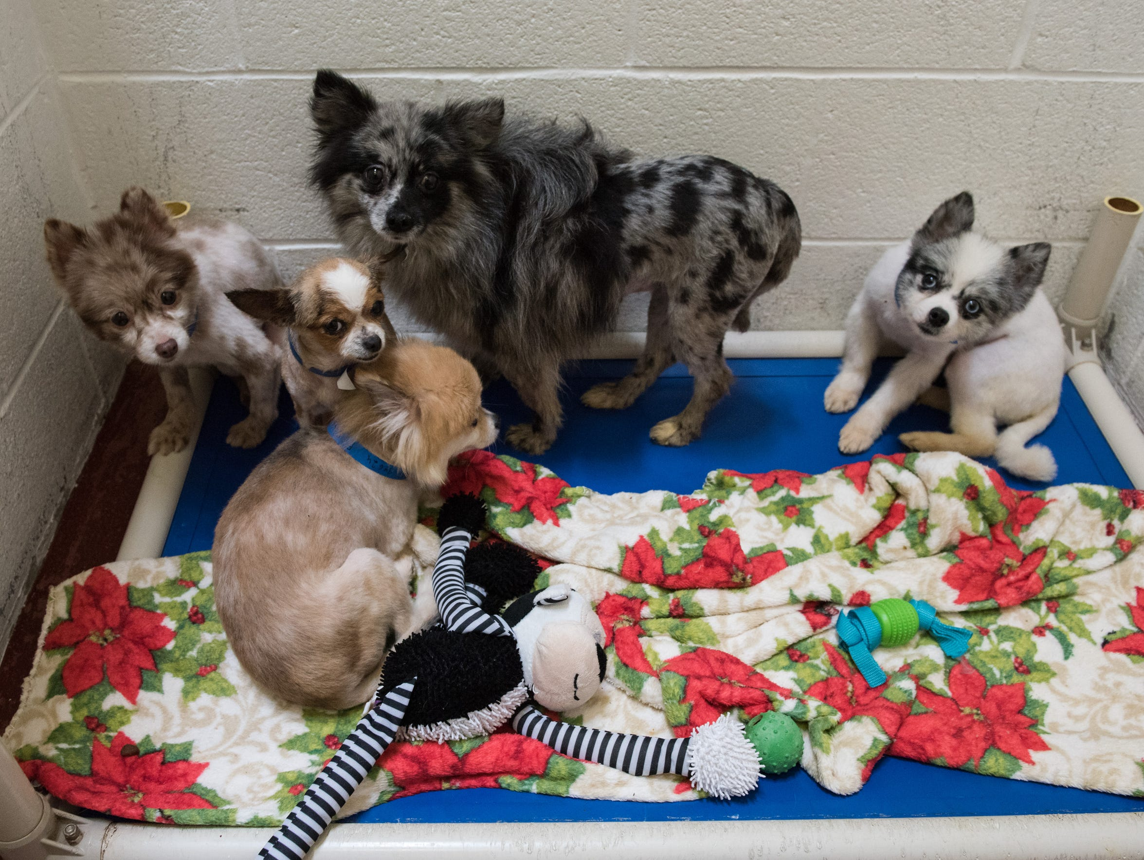 A kennel full of dogs seized in Eden in their kennel